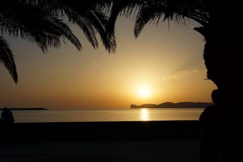 Sun set by a palm